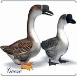 Click to download the 'Running Geese (for Poser)'