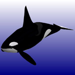 Click to see information about the 'Killer Whale Male (for Poser)'.