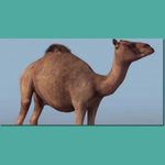 Click to see information about the 'Dromedary Camel (for 3D Studio Max)'.