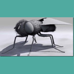Gray Fly (for 3D Studio Max)
