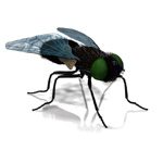 Click to see information about the 'Gray Fly (for Poser)'.