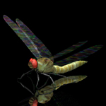 Click to see information about the 'Dragon Fly (for Poser)'.