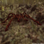 Tarantula (for Poser)