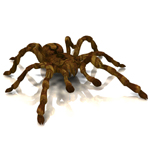 Click to see information about the 'Tarantula (for Poser)'.