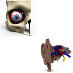 Click to see information about the 'Eye and Ear Pack (for Poser)'.