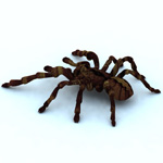 Tarantula (for Vue)