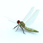 Dragon Fly (for Vue)