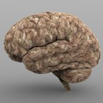 Brain w/ Interior Textured (for Wavefront OBJ)