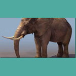 Click to see information about the 'Elephant (for 3D Studio Max)'.
