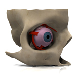 Eye Disection (for Vue)