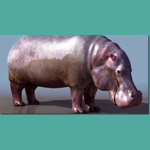 Click to see information about the 'Hippopotamus (for 3D Studio Max)'.