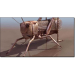 Click to see information about the 'Grasshopper (for 3D Studio Max)'.