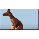 Click to see information about the 'Kangaroo (for 3D Studio Max)'.