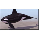 Click to see information about the 'Killer Whale Male (for 3D Studio Max)'.