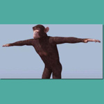 Click to see information about the 'Chimpanzee (for 3D Studio Max)'.