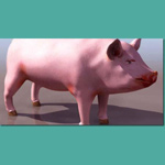 Click to see information about the 'Pig (for 3D Studio Max)'.