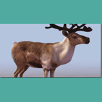 Click to see information about the 'Reindeer (for 3D Studio Max)'.