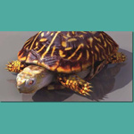Click to see information about the 'Turtle (for 3D Studio Max)'.