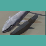 Click to see information about the 'Blue Whale (for 3D Studio Max)'.