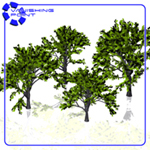 Click to see information about the 'VP Tree Set 1 (for Poser)'.