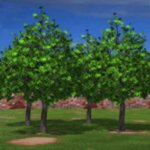 Trees Set 1 (for Poser)