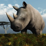 Click to see information about the 'Rhinoceros (for Poser)'.