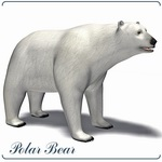 Click to see information about the 'Polar Bear (for Poser)'.