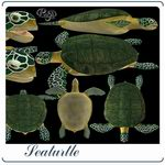 Sea Turtle (for Poser)